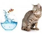 Gato tem medo de água – Saiba o motivo!