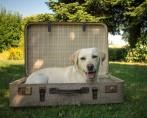 Viajar com cachorro – Tudo para uma viagem segura