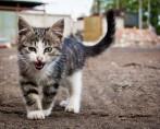 Gato mia – Uma brincadeira que tem explicação!