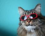 Felinos famosos - Como não se apaixonar por esses felinos famosos?