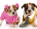 Cachorro macho ou fêmea – Você sabe diferenciar?