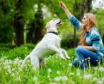 Cachorros felizes – Você sabe o que faz deles realmente assim?