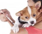 Vermífugo para cães e gatos – Quando e como administrar?