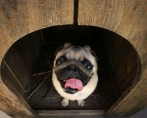 Casinha de cachorro – Por que seu cão deve ter uma?