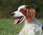 Saiba tudo sobre a castração em cadelas