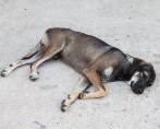 Cão faz vigília de 6 horas para cadela atropelada em avenida da China