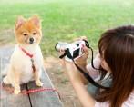 Fotos do cachorro – Como tirar fotos de cachorros