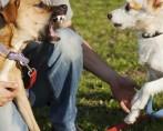 Cachorro Ciumento - Entenda de onde vem o ciúme do seu cachorro
