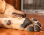 Patas de cachorro e seus cuidados especiais