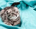 Conheça os tipos de caminhas para gato