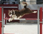Agility para Cães - Obstáculos e Equipamentos