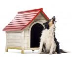 Cachorro Uivando - O que isso significa?