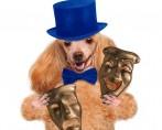 Filmes com cães – Cachorros atores nas telonas de cinema