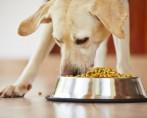 Ração para cachorro – Saiba oferecer uma dieta adequada ao seu pet