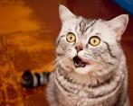 Fofinhos, engraçados ou sérios: tire as melhores fotos do seu gato