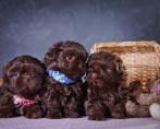 Fotos de Cachorros - Cães Fofos e Famosos