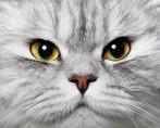 As cores de gatos: conheça a genética da pelagem felina