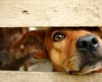 Grade de porta para cachorros: conheça os modelos existentes
