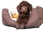 Caminha de cães: saiba como escolher e onde colocar