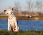 O universo dos cães: confira algumas curiosidades sobre o melhor amigo