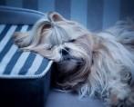 Colchão para cães: saiba como deve ser a caminha ideal para seupet