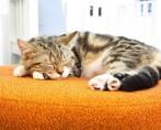 Colchão para gatos: dicas importantes na hora de escolher o modelo