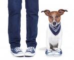 Sapatinhos para cães: necessidade, cuidado ou apenas um mimo?