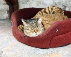 Colchonetes para gatos: Conforto e um lugar ideal para dormir