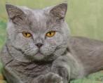 Conheça os mitos e verdades do universo dos gatos