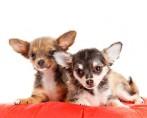 Conheça os principais benefícios da ração para pets