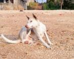 Cuide de seu melhor amigo: como acabar com os carrapatos em cães