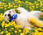 Descubra a importância dos brinquedos para cães e divirta-se