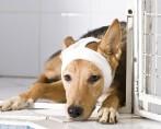 Aplique o tratamento de giárdia para livrar seu pet desse mal