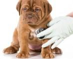 Complexo vitamínico para cães: cuidados indispensáveis