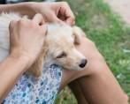Carrapato em Cachorros – O que fazer?
