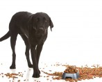 Saiba quais são as melhores comidinhas para cães