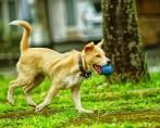 Diversão de cães é garantida em parque paulista
