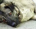 Cachorros de Rua - Saiba como ajudá-los