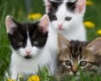 Criatividade não tem limites: veja algumas frases sobre gatos