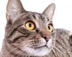 Conheça 7 passos para treinar gatos domésticos