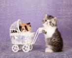 Carrinhos para pets: o que saber antes de comprá-los