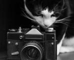 Imagens de felino: confira as dicas de especialistas