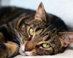 Origem dos felinos: como e onde surgiram nossos gatinhos?