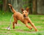 Brincadeira de cães também divertem seus donos!