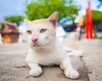 As sete vidas felinas: descubra como surgiu essa lenda