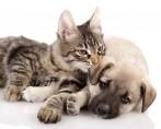 Apelidos para pets: uma lista para ajudar na escolha