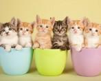 Apelidos felinos: uma lista para você se inspirar