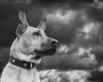 A importância da placa de identificação para cães