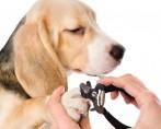 Tudo sobre cães: cuidados para deixar seu cãozinho feliz