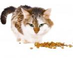 Tudo sobre gatos: cuidados com a alimentação do seu pet